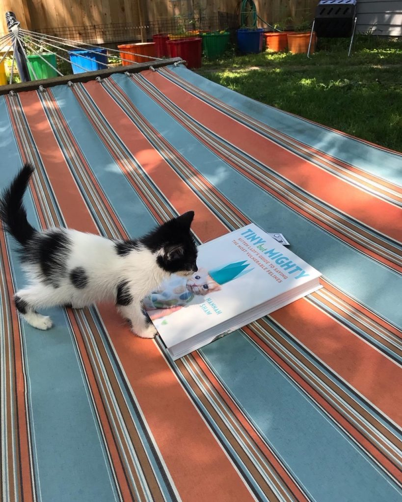 "Kitten playing on book saying ""Small but Mighty"""