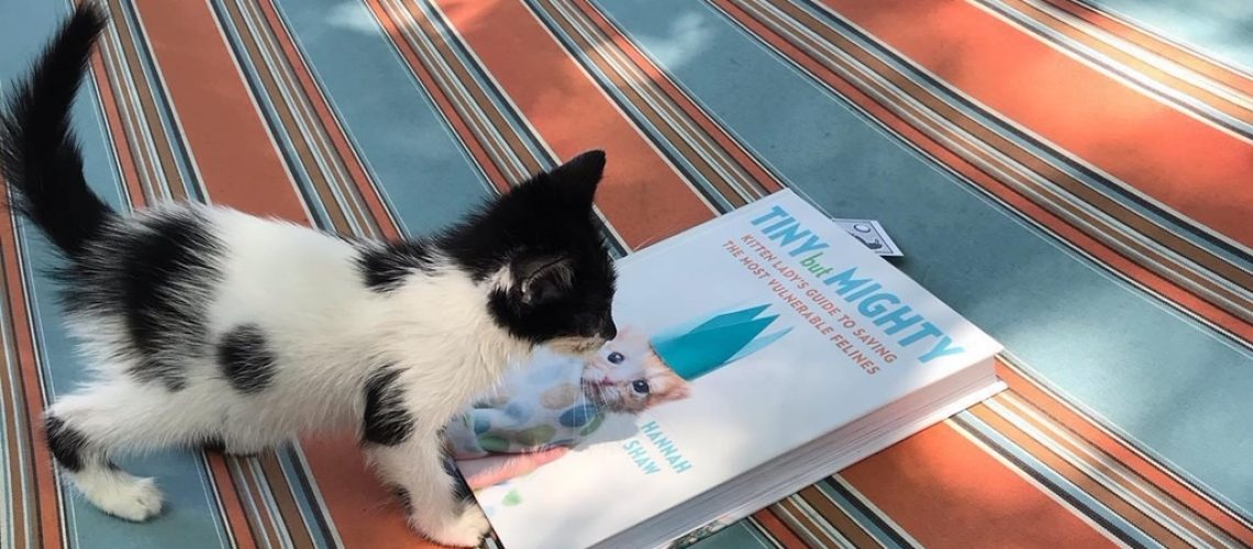 Kitten playing on book saying