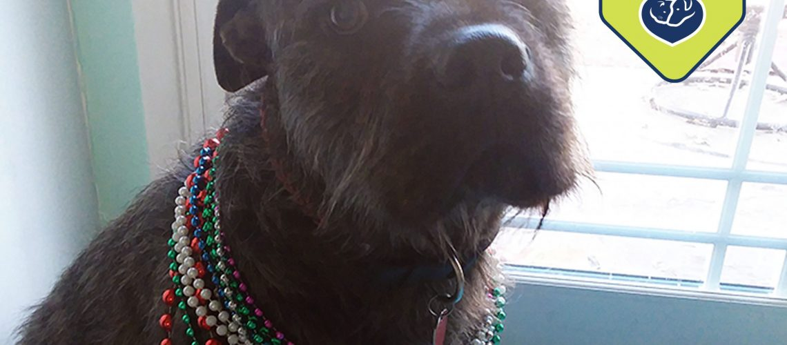 Pets Heal Hearts - Mardi Gras